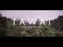 Tawai A Voice from the Forest (Malayalam) Movie